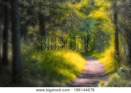 Scenic walking trail in Michigan state park