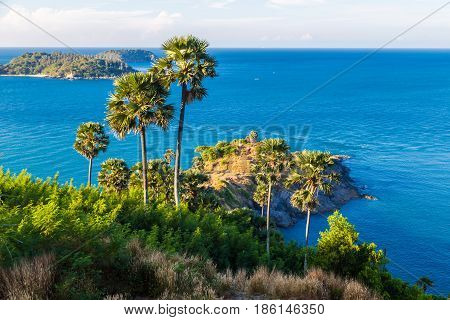 Sea Shore Tropical Rocky Beach With Palm Tree