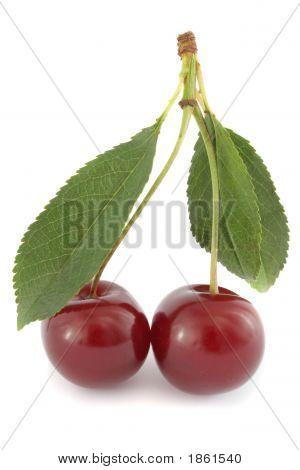 Couple Of Ripe Sour Cherries