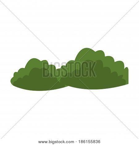 green bushes natural foliage image vector illustration