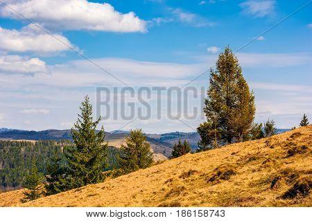 Spruce Forest In Springtime Landscape