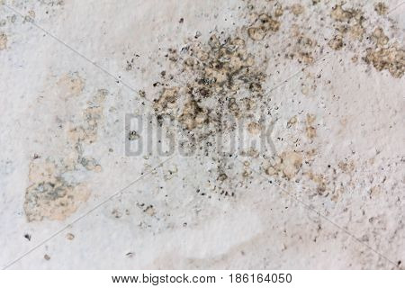 Old  Plaster On The Wall. Grunge Concrete Texture. Retro Texture. Distress Texture.