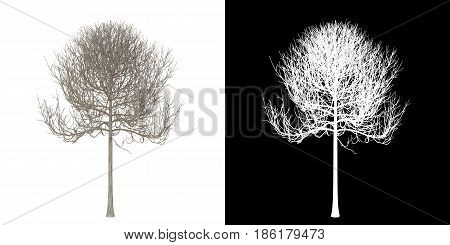 Dead tree isolated on white with alpha channel