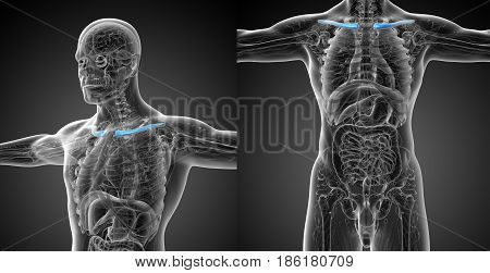 3D Rendering Medical Illustration Of The Clavicle Bone