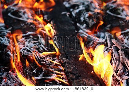 Bright tongues of flames open fire woodfire in the open air