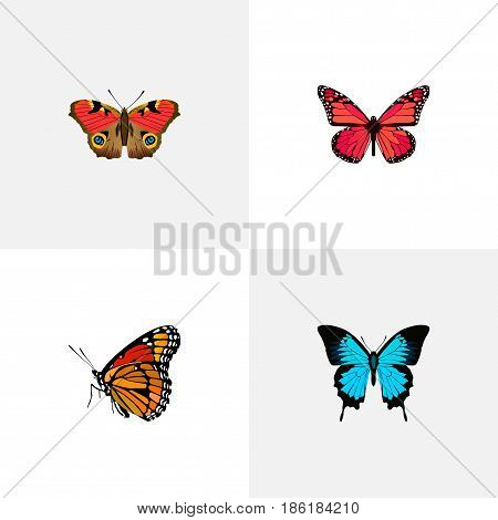 Realistic American Painted Lady, Azure Peacock, Milkweed And Other Vector Elements. Set Of Beautiful Realistic Symbols Also Includes Butterfly, Peacock, Pink Objects.