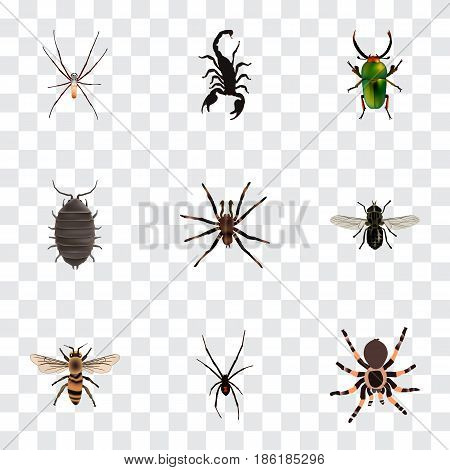Realistic Dor, Arachnid, Insect And Other Vector Elements. Set Of Insect Realistic Symbols Also Includes Scorpion, Tarantula, Spinner Objects.