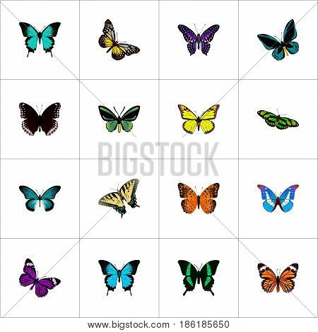 Realistic Checkerspot, Archippus, Copper And Other Vector Elements. Set Of Butterfly Realistic Symbols Also Includes Fly, Monarch, Bluewing Objects.