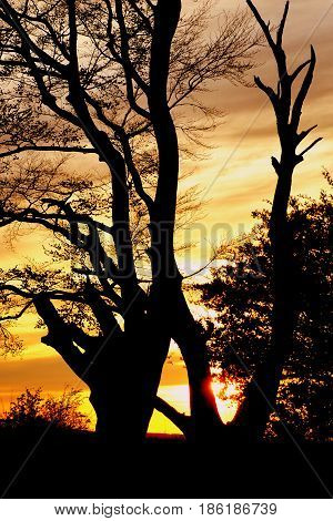 Silhouettes in the sunset from Rye forrest Denmark