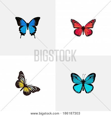 Realistic Azure Peacock, Common Blue, Sky Animal And Other Vector Elements. Set Of Beautiful Realistic Symbols Also Includes Cypris, Blue, Butterfly Objects.