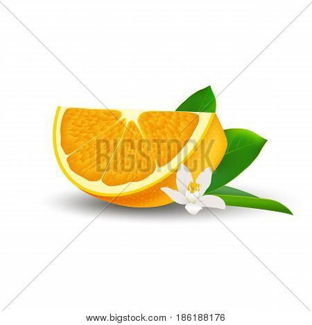 Isolated realistic colored slice of juicy orange with green leaf white flower and shadow on white background