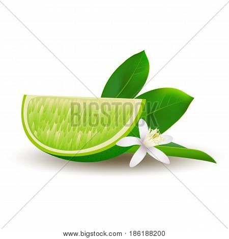 Isolated realistic colored slice of juicy green lime with green leaf white flower and shadow on white background
