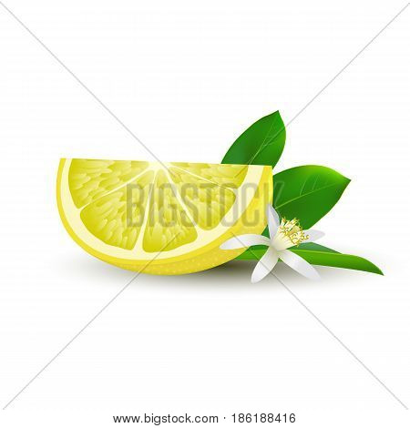 Isolated realistic colored slice of juicy yellow lemon with green leaf white flower and shadow on white background