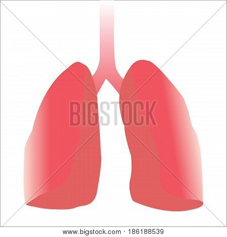 Human red tone lungs and tube. Vector. Illustration. graphic design.