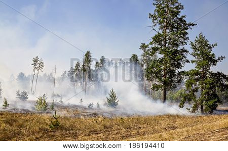 Forest fire due to prolonged drought in summer, Donbass, Ukraine