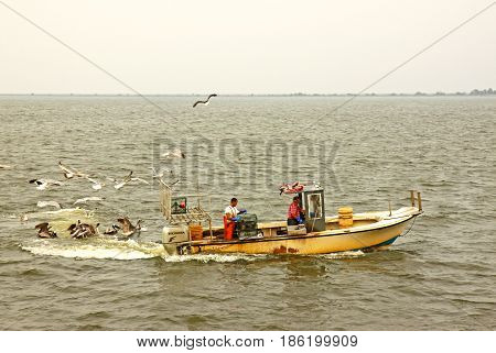 WANCHESE, NORTH CAROLINA - June 29 2011: Fishermen mobbed by gulls and pelicans while checking crab pots in Pamlico Sound off the fishing village of Wanchese on the outer banks of North Carolina.