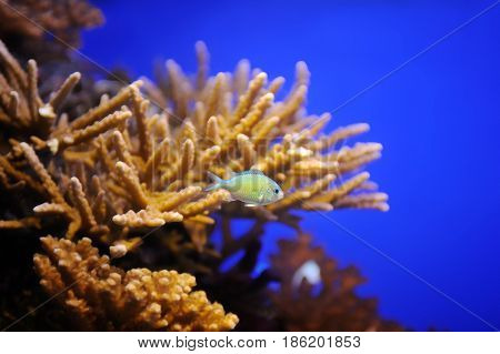 Fish And Corals Of The Red Sea