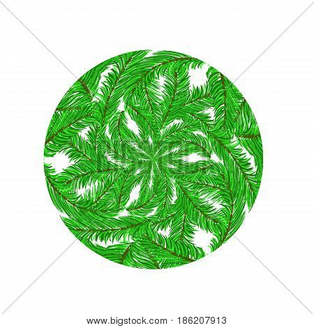 Fir Green Branches Pattern on White Background