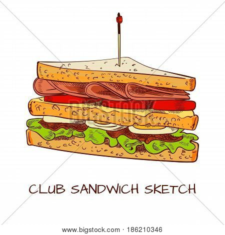 Club sandwich colored sketch. VECTOR sketch. Brown contour lines isolated on white