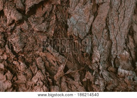 Schinus molle bark texture. California Pepper tree bark. Peruvian pepper. Abstract texture and background from Schunis molle tree bark. Macro view of pepper tree bark texture.