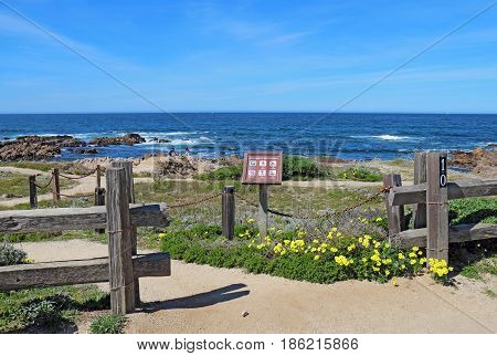 PACIFIC GROVE CALIFORNIA - MARCH 17 2017: Walkway fence sign and early spring wildflowers with people surf and rocks in the background of the park at Asilomar State Beach on the Monterey Peninsula
