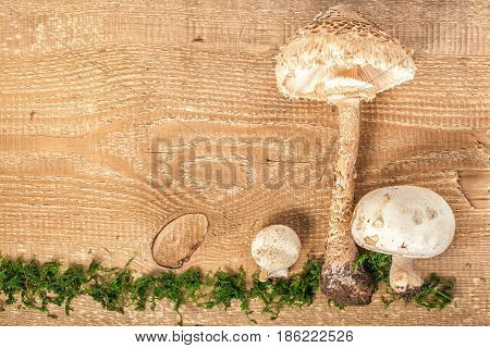 Forest Mushroom Champignon And Parasol On Rustic Wooden Background With Green Moss