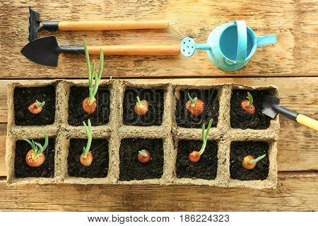 Plant cultivation with garden tools on wooden window sill, top view
