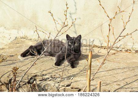 Cat lying on street