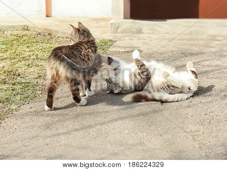 Cats playing on street