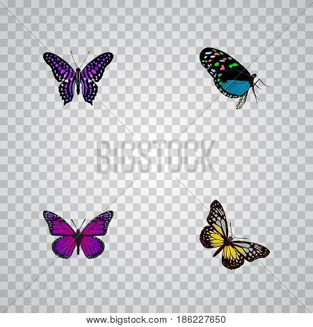Realistic Hairstreak, Purple Monarch, Summer Insect And Other Vector Elements. Set Of Beautiful Realistic Symbols Also Includes Beauty, Purple, Blue Objects.