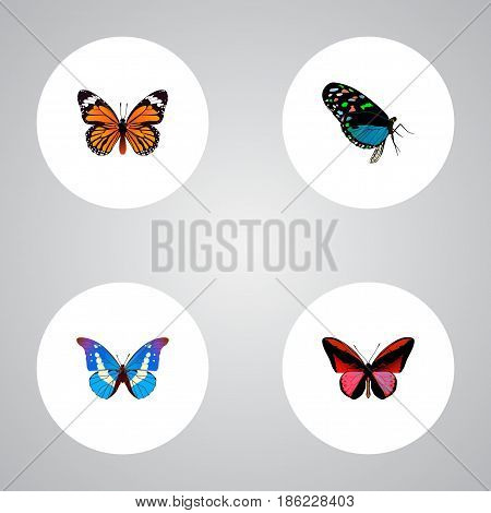 Realistic Callicore Cynosura, Bluewing, Monarch And Other Vector Elements. Set Of Butterfly Realistic Symbols Also Includes Blue, Bluewing, Orange Objects.