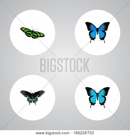 Realistic Morpho Hecuba, Papilio Ulysses, Common Blue And Other Vector Elements. Set Of Beauty Realistic Symbols Also Includes Blue, Cypris, Moth Objects.