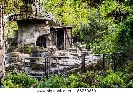 Amsterdam, Netherlands - April, 2017: Visitors in Amsterdam city Zoo, Netherlands