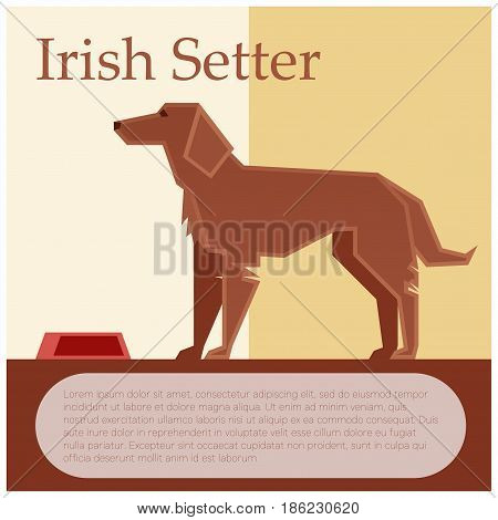 Vector image of the Irish setter colourful postcard