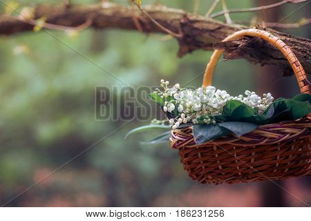 Basket with lilies of the valley on the branch
