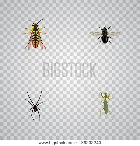 Realistic Grasshopper, Bee, Midge And Other Vector Elements. Set Of Insect Realistic Symbols Also Includes Fly, Spinner, Gnat Objects.
