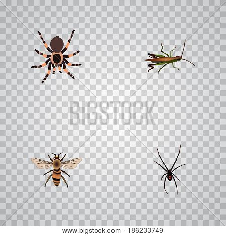 Realistic Spinner, Tarantula, Locust And Other Vector Elements. Set Of Insect Realistic Symbols Also Includes Spinner, Wasp, Spider Objects.