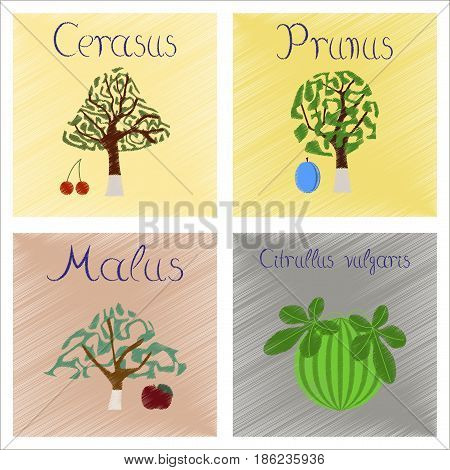 assembly flat shading style Illustrations of Citrullus Malus Prunus Cerasus