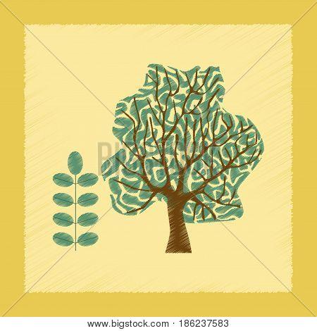 flat shading style Illustrations of plant Acacia