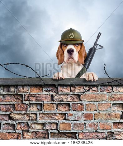 The Sentry Dog With Gun