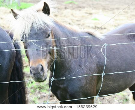 Pony with white mane standing by a wire fence
