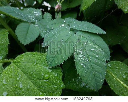 Clear raindrops form delicate patterns on a gently swaying leaf. Raindrops leaves.