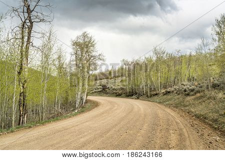 back country road through aspen grove with fresh foliage, North Park, Colorado, windy spring scenery