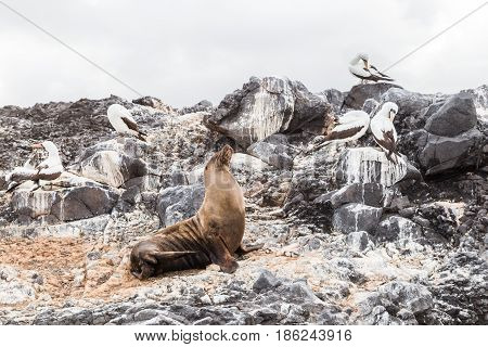 Sea lion and birds of the Galapagos basking on the beach