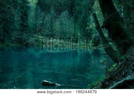 Magical pond in mysterious dark forest .