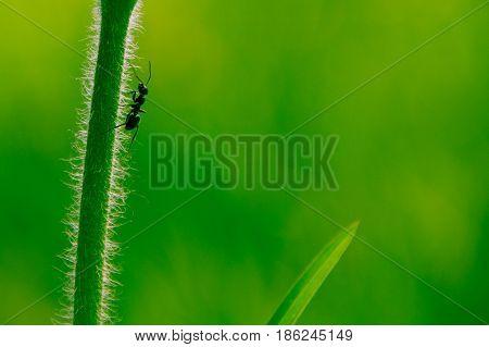 prise macro fourmie avec une profondeur de champ réduite