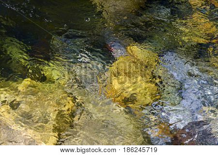 Abstract background: flowing water in a river on a bright sunny day bubbles and glare on the surface of water a multicolored bottom of yellow stones and a green tint shine through.