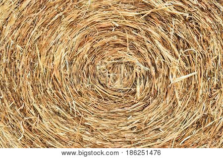 bale of hay rolled and tied in the shape of cylinder