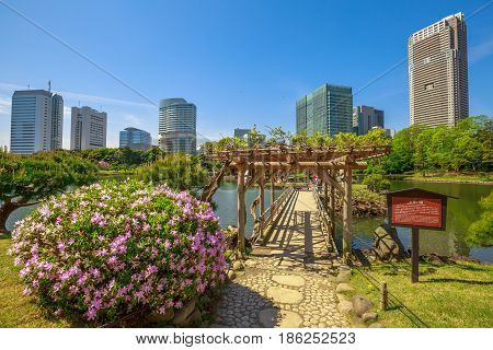Tokyo, Japan - April 20, 2017: Beautiful Hamarikyu Gardens in spring with blooms, Chuo district. The traditionally styled garden stands in stark contrast to skyscrapers of adjacent Shiodome district.