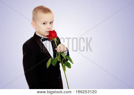 Beautiful little boy in a strict black suit , white shirt and tie.Boy holding a flower of a red rose on a long stem.Purple gradient background.